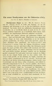 Vol 29: Ein neuer Brachysomus aus der Bukowina Col.