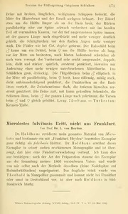 Vol 32: Microlestes fulvibasis REITT. nicht aus Frankfurt