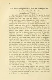 Vol 35: Ein neuer Anophthalmus aus der Herzegowina
