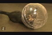 hamster free fotmassage malmö
