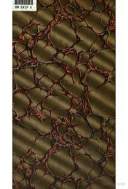 August Strindberg: eine pathologische Studie
