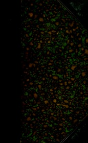 Catalogue of a private collection of ancient and modern paintings, marble statue, antique marble medallions, and a few medals and coins ... [06/24/1859]