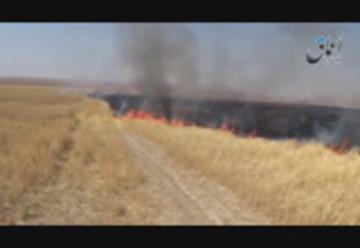131 إحراق الأراضي الزراعية في قرية العاشق شرقي تلعفر من قبل قوات البشمركة