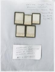 Waldo Newcomer Archives