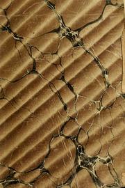 Observations critiques sur les conférences du r. p. Lacordaire : avec la suite