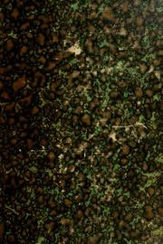 Vol 10: Oeuvres. Publiées par les soins de J.-A. Serret, sous les auspices du ministre de l-instruction publique
