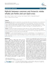 Vol 14: Hybrids between common and Antarctic minke whales are fertile and can back-cross.