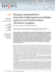 Vol 4: Shaping a lateralized brain: Asymmetrical light experience modulates access to visual interhemispheric information in pigeons.