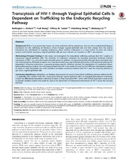 Vol 9: Transcytosis of HIV-1 through Vaginal Epithelial Cells Is Dependent on Trafficking to the Endocytic Recycling Pathway.