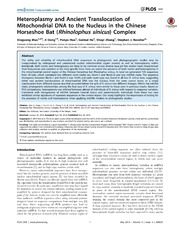 Vol 9: Heteroplasmy and Ancient Translocation of Mitochondrial DNA to the Nucleus in the Chinese Horseshoe Bat (Rhinolophus sinicus) Complex.