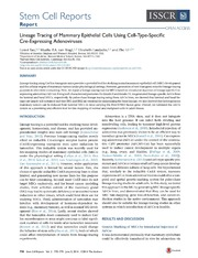 Vol 2: Lineage Tracing of Mammary Epithelial Cells Using Cell-Type-Specific Cre-Expressing Adenoviruses.