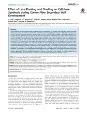 Vol 9: Effect of Late Planting and Shading on Cellulose Synthesis during Cotton Fiber Secondary Wall Development.