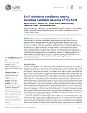 Vol 3: Lhx1 maintains synchrony among circadian oscillator neurons of the SCN.