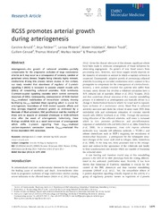 Vol 6: RGS5 promotes arterial growth during arteriogenesis.