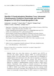 Vol 15: Matrilin-3 Chondrodysplasia Mutations Cause Attenuated Chondrogenesis, Premature Hypertrophy and Aberrant Response to TGF- in Chondroprogenitor Cells.