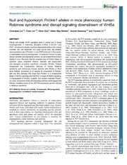 Vol 3: Null and hypomorph Prickle1 alleles in mice phenocopy human Robinow syndrome and disrupt signaling downstream of Wnt5a.