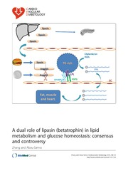 Vol 13: A dual role of lipasin (betatrophin) in lipid metabolism and glucose homeostasis: consensus and controversy.