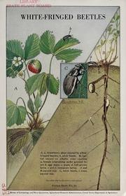Red spider washington d c bureau of entomology and for Bureau quarantine