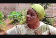 my nollywood movies free download